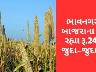 Gujarat All APMC Latest rates of 13 March 2020 Gujarat ni badhij APMC na Mandi rates