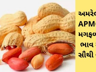 Gujarat All APMC Latest rates of 11th March 2020 Gujarat ni badhij APMC na Mandi rates