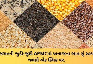 Gujarat All APMC Latest rates of 14th March 2020 Gujarat ni badhij APMC na Mandi rates