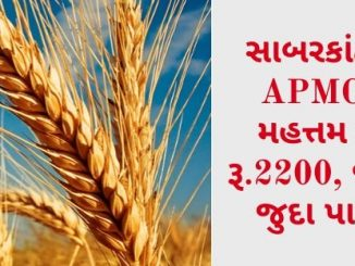 Gujarat All APMC Latest rates of 17 March 2020 Gujarat ni badhij APMC na Mandi rates