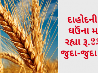 Gujarat All APMC Latest rates of 5 March 2020 Gujarat ni badhij APMC na Mandi rates