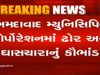 Ahmedabad: Over 90 cattle go missing from AMC's stable house