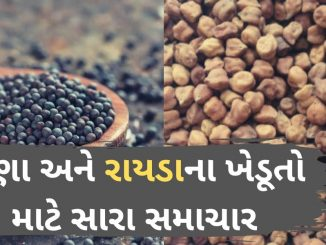 Gandhinagar: Govt to procure gram and mustard at MSP from April 1 to May 31