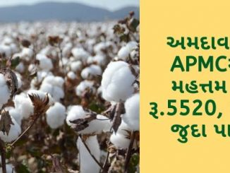 Gujarat All APMC Latest rates of 16 March 2020 Gujarat ni badhij APMC na Mandi rates