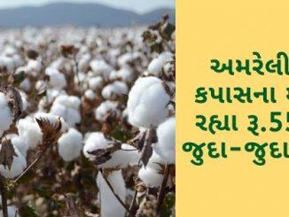 Gujarat All APMC Latest rates of 3 March 2020 Gujarat ni badhij APMC na Mandi rates