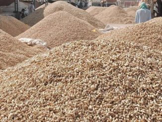 Gondal received unseasonal rain, groundnut crops destroyed