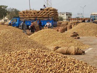 Following rain prediction Hapa Marketing yard stops purchase of Cotton Groundnuts Jamnagar