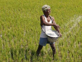 CM Rupani likely to make an important announcement for farmers today Kheduto ni aavak bamni karva no plan CM Vijay Rupani aaje moti jaherat kari shake