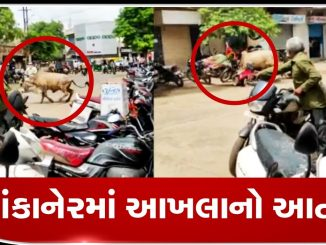 The terrifying moment when a BULL tossed a WOMAN into air in Vankaner, Morbi Morbi aakhla no aatank aavyo same scooter par jati mahilao ne aakhla e lidhi aadfete juvo video