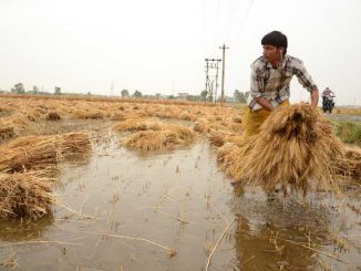 Gujarat govt to compensate farmers with 33% or above crop loss according to govt survey RC Faldu