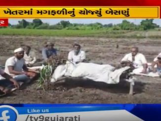 Jetpur farmers take out last procession of groundnut crops damaged by rain Rajkot