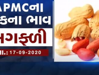 September 17 prices of grains sold in various market yards of Gujarat