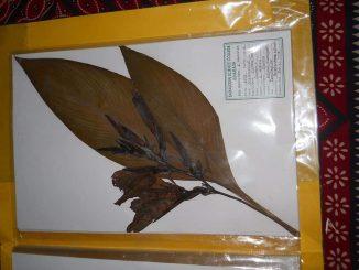 Surat na Paryavaran premi shikshake karyu herbarium sheet nu collection jano tena vishe