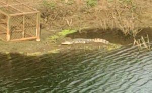 https://tv9gujarati.com/news-media/golden-bridge-na…-paanjru-gothvyu-160137.html
