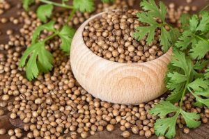 You may still be unaware of the benefits of dried coriander, learn the benefits of coriander