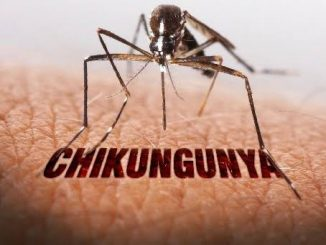 Chikungunya is the most common disease after monsoon, learn about its severity and treatment