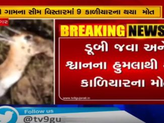 9 antelopes died of drowning and dog attacks in Bhavnagar