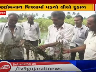 Excessive rainfall leads to crops loss, farmers demand compensation at the earliest