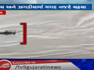Crocodiles came to Bharuch and Zadhadiya with the water of Narmada