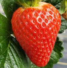 ત્વચા અને વાળને સુંદર બનાવવા છે તો ખાવો આ ફળ, મિનરલ્સ અને વિટામિનથી ભરપૂર આ ફળના ફાયદા છે અનેક
