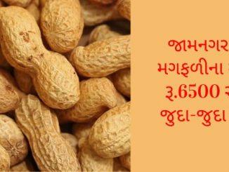 https://tv9gujarati.com/gir-somnath-district-news-in-gujarat/khedut-apmc-juna…var-bhav-magfali-179151.html
