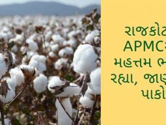 ખેડૂત મિત્રો માટે ગુજરાતના પાકોના APMCના ભાવ વિશેની માહિતી, ગુજરાતના વિવિધ માર્કેટયાર્ડના 03 ઓક્ટોબરનાં ભાવ