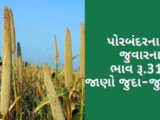 The maximum price of sorghum in APMC of Porbandar was Rs.3175, know different crops