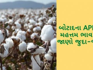 The maximum price of cotton in Botad's APMC is Rs. 5255 remained