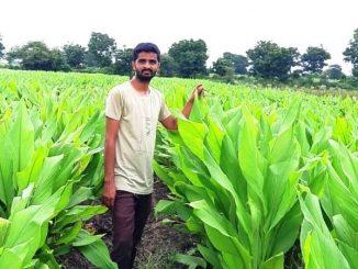 organic-farmer-turmeric-farming-processing-powder-sarang-farm