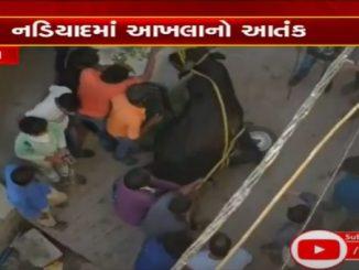 Man killed in bull fight in Nadiad Kheda