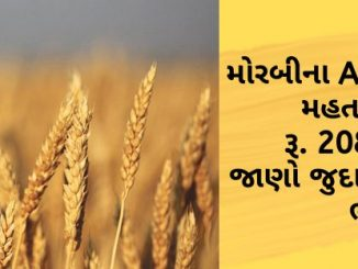 the-maximum-price-of-wheat-in-morbis-apmc-is-rs-2080-find-out-the-prices-of-different-crops