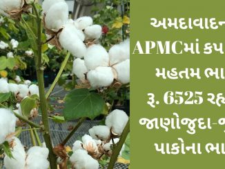 The maximum price of cotton in APMC, Ahmedabad is Rs. 6525 remained