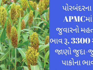 The maximum price of sorghum in APMC, Porbandar is Rs. 3300, find out the prices of different crops