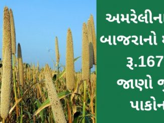 The maximum price of Bajra in APMC of Amreli was Rs.1675, find out the prices of different crops