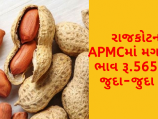 The maximum price of groundnut in Bhavnagar APMC is Rs. 6060, find out the prices of different crops