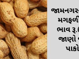 jamnagarna-apmcma-magfalina-mahatam-bhav-rupiya-6700-rahya-jano-juda-juda-pakona-bhav