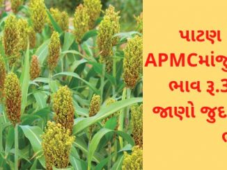 The maximum price of sorghum at Siddhpur APMC in Patan was Rs 3,500